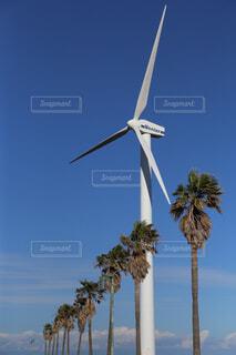ヤシの木の横にある風車の写真・画像素材[1678906]