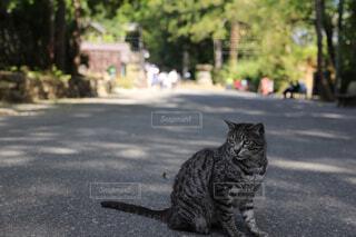 道路の真ん中に猫が座っています。の写真・画像素材[1682306]