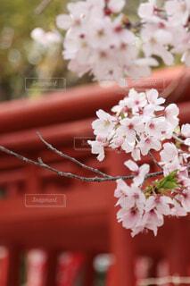 花の写真・画像素材[2001520]
