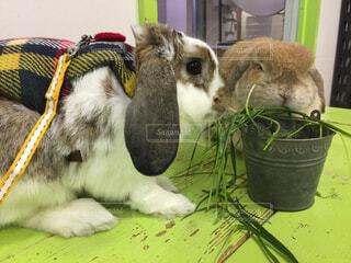 ウサギのおやつタイムの写真・画像素材[1880275]