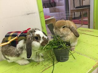 ウサギのおやつタイムの写真・画像素材[1880283]