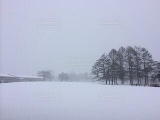 一面真っ白の写真・画像素材[1673919]