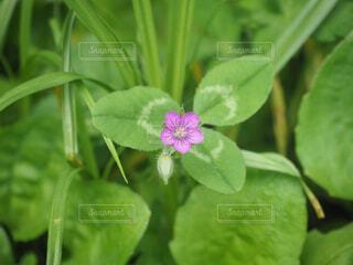 ひっそりと咲くの写真・画像素材[1674513]