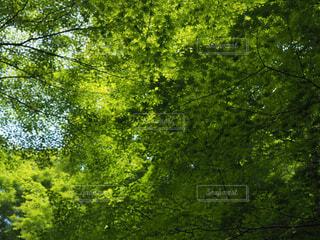 緑燃ゆの写真・画像素材[1676074]