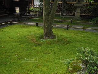 苔庭の写真・画像素材[1676077]