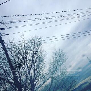 電線にとまる鳥の群れ!の写真・画像素材[1673346]