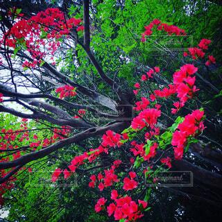 鮮やかな花の写真・画像素材[1673788]