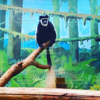 枝の上に座った猿の写真・画像素材[1673897]