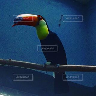 カラフルな鳥の写真・画像素材[1673901]