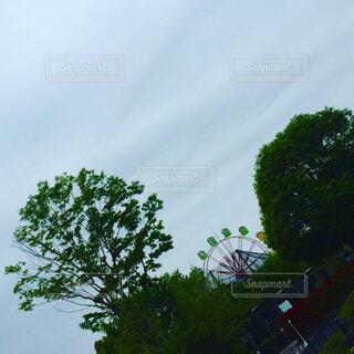 木と観覧車の写真・画像素材[1674021]