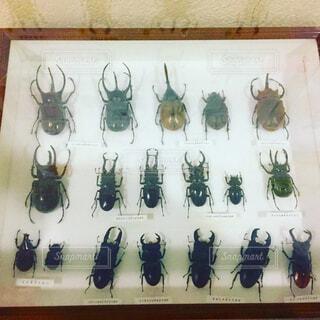 昆虫標本の写真・画像素材[1674029]