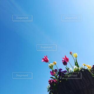 空とチューリップの写真・画像素材[1675131]