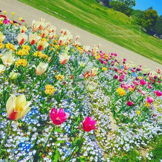 カラフルな花畑の写真・画像素材[1675132]