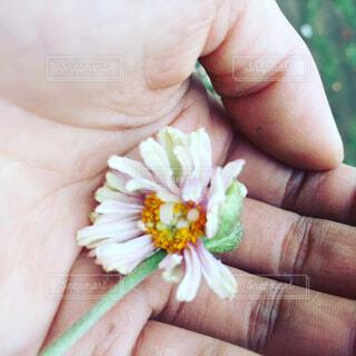 花を持っている手の写真・画像素材[1676757]