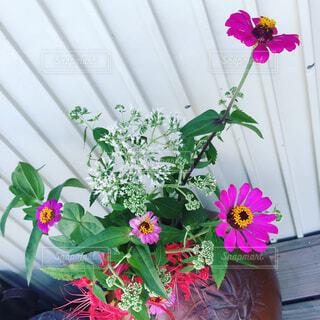 花の写真・画像素材[1676776]