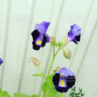 花の写真・画像素材[1676812]