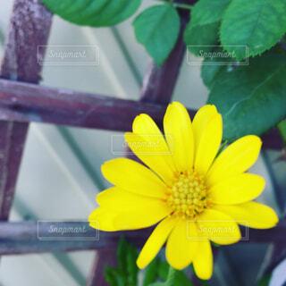 緑の葉と黄色の花の写真・画像素材[1678123]