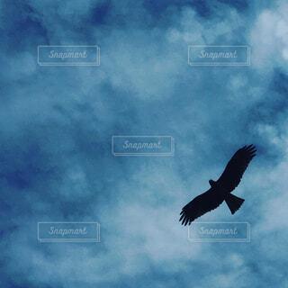 空飛ぶ鳥の写真・画像素材[1678141]