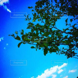 空と葉っぱの写真・画像素材[1678212]