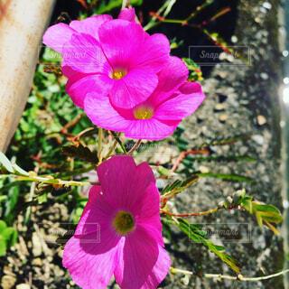 花の写真・画像素材[1678670]