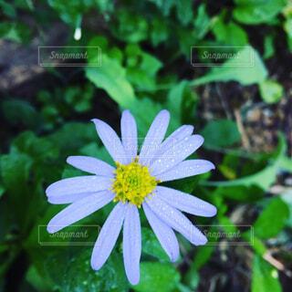 花の写真・画像素材[1678775]