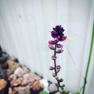 花の写真・画像素材[1679502]