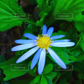 花の写真・画像素材[1679624]