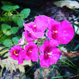 花の写真・画像素材[1679689]