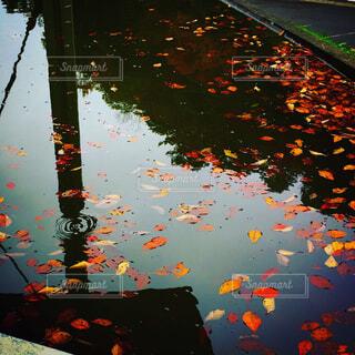 雨の中の光の写真・画像素材[1679719]