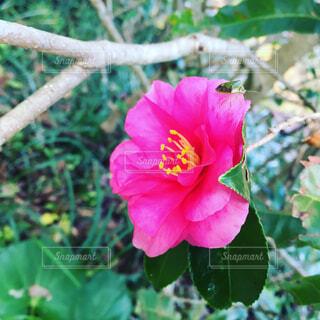 花の写真・画像素材[1679742]