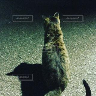 ネコの写真・画像素材[1679819]