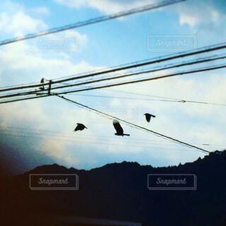 鴉と鳶の闘いの写真・画像素材[1735489]