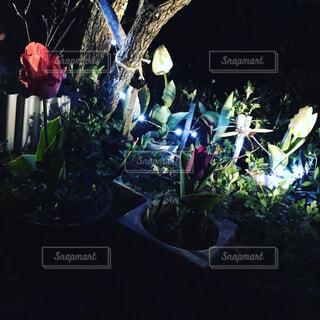 ミニチューリップ祭り🌷の写真・画像素材[2059091]