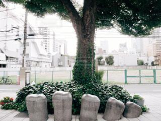表参道の木の写真・画像素材[1679236]