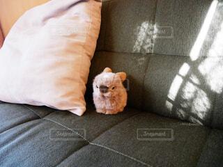 ソファで眠っている人の写真・画像素材[1697372]