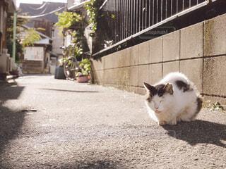 歩道の上を歩く猫の写真・画像素材[1717532]