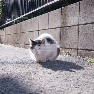 白いフェンスの上に座っている猫の写真・画像素材[1778258]