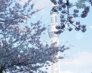 桜とスカイツリーの写真・画像素材[1786852]