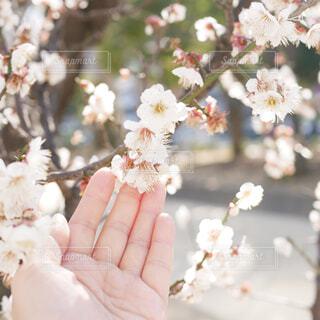 花のクローズアップの写真・画像素材[2935647]