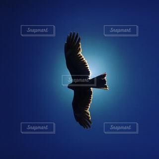 太陽と鷹の写真・画像素材[2111355]