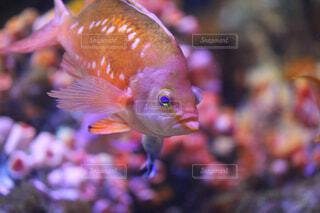 水族館の鮮やかな色の魚の写真・画像素材[1678464]
