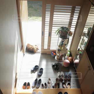 犬のお昼寝の写真・画像素材[1692568]