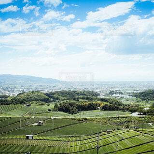 茶畑の写真・画像素材[1676559]
