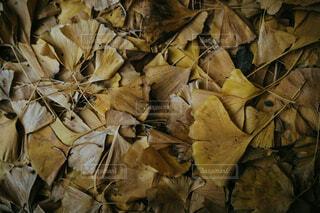 秋残りの写真・画像素材[1681166]