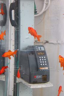 魚の写真・画像素材[1680092]
