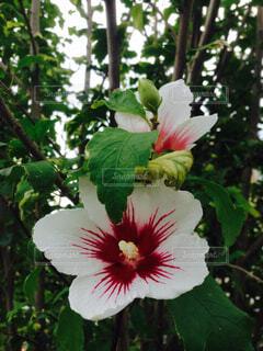 花の写真・画像素材[1678538]