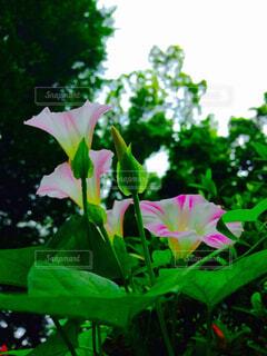 近くの花の写真・画像素材[1683280]
