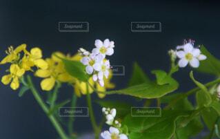 近くの花のアップの写真・画像素材[1682739]
