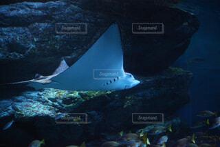 水面下を泳ぐ魚たちの写真・画像素材[1679138]