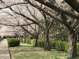 公園の木の写真・画像素材[1696241]